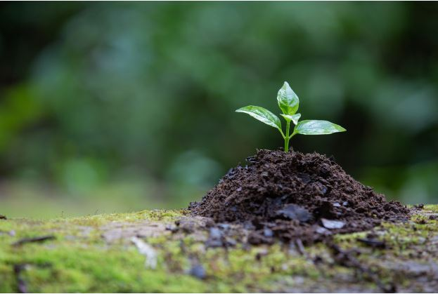 Definisi Lingkungan Hidup