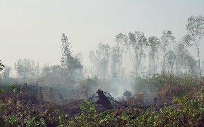 kerusakan-hutan